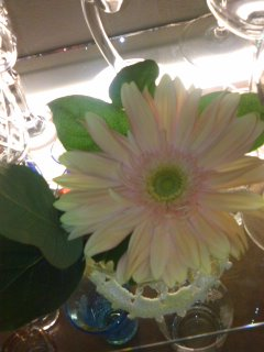 ファンキーのお花